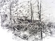 W. Hew Elcock, Study for Beaver Dam, Pencil On Paper